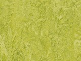 Forbo Marmoleum Real, 3224-322435 chartreuse .